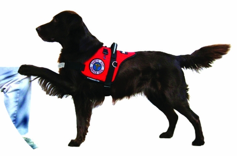 Certified Therapy Dog Training Mn